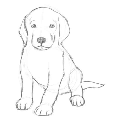 pictures of puppies to draw drawing easy