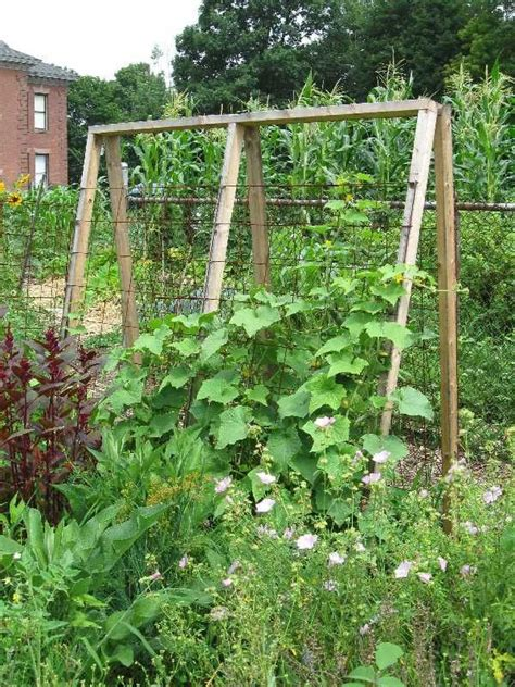 Vegetable Garden Trellis Ideas Cucumber Trellis Bob Pinterest Gardens And Vegetables