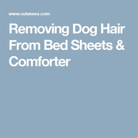 best comforter for dog hair 1000 ideas about remove pet hair on pinterest dog care