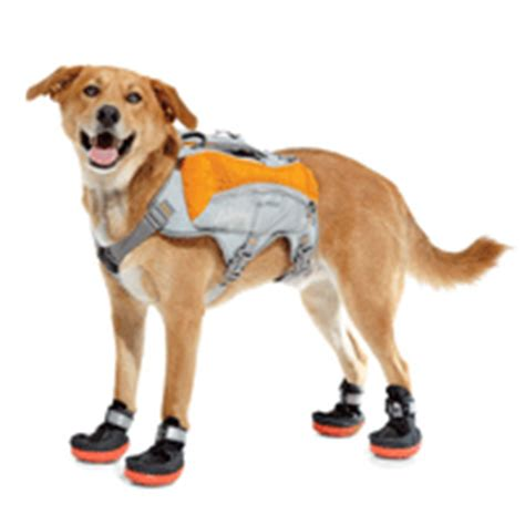 dogs running shoes wagging goods runner s world