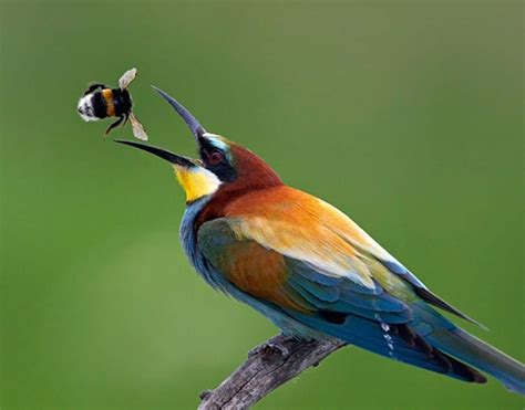 45 world of beautiful birds great inspire