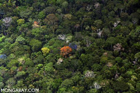 canopy amazon rainforest canopy in the peruvian amazon photo by rhett a