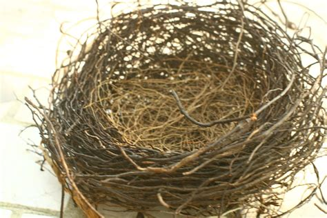 final sale birds nest natural nest nests by vintageatmosphere