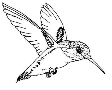 texas bird coloring page tpwd kids ruby throated hummingbird