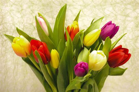 imagenes tulipanes rosas im 225 gene experience 20 fotos gratis de rosas tulipanes y