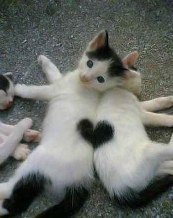 i love cats cute cat kitten pictures cute cat inspirational images and quotes may 2012 171 ideas