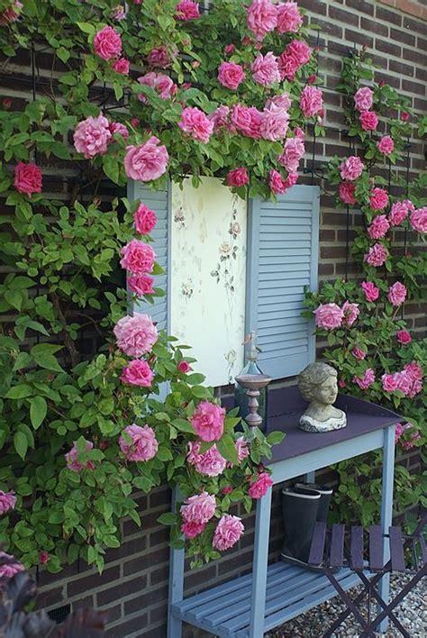 shabby chic garden ideas pinterest