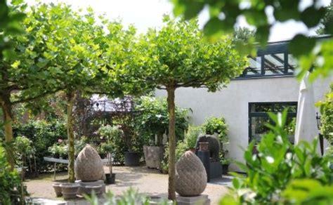 Steins Gardens by Platanen Und Stein Garden