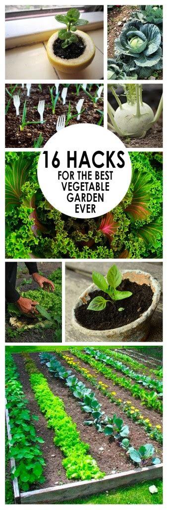 hacks    vegetable garden  bees  roses