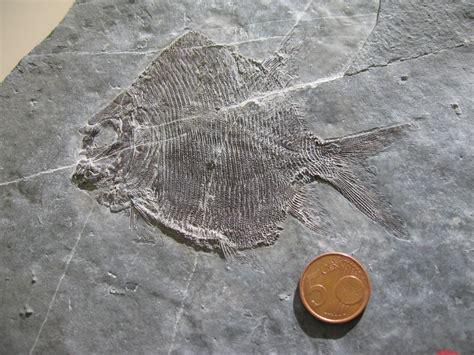 comune porto ceresio sito paleontologico comune di porto ceresio