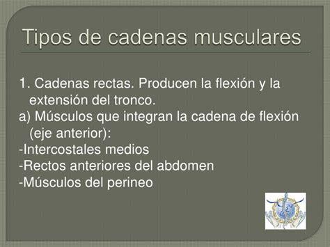 cadenas musculares anteriores cadenas musculares