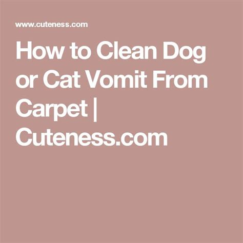 how to clean cat vomit from rug how to clean or cat vomit from carpet cuteness cleaning carpets