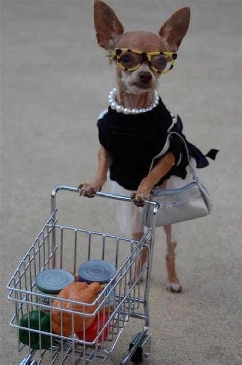 puppy shopping shopping image laughspark