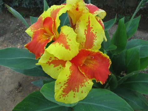 dei fiori fiction viri lullabies l arte della rosa di aleena cap 4
