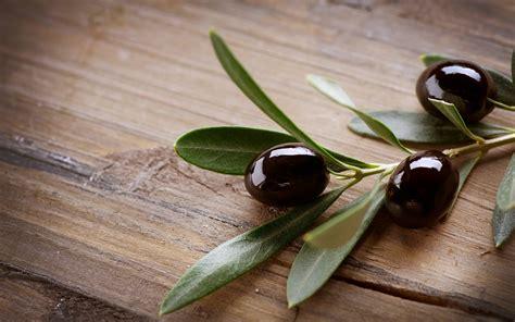 Olive Black T3010 2 olive hd fond d 233 cran and arri 232 re plan 2560x1600 id 437621