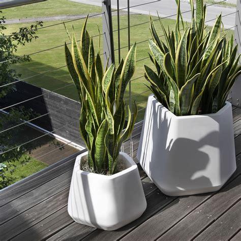 piante in vaso da esterno vaso per piante da esterno e interno ops m nicoli