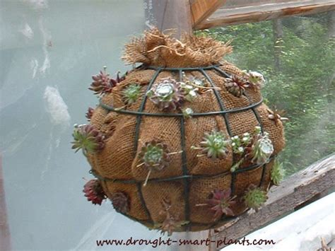 how to make a sphere out of wire succulent balls sempervivum globes orbs wire garden spheres