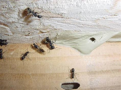 flying ants in house flying ants in my house www imgkid com the image kid has it