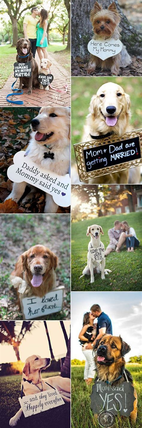 The 25  best Dog baby announcements ideas on Pinterest