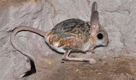 imagenes de animales feos del mundo los animales m 225 s feos del mundo