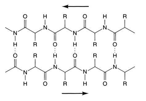 define cadena polipeptidica estructura secundaria de las proteinas temas de bioquimica