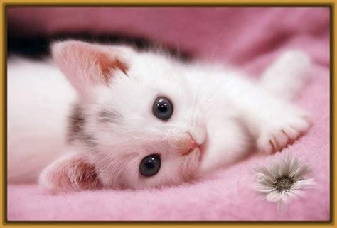 fotos muy bonitas de gatos lindas imagenes de gatitos tiernos con frases de amor