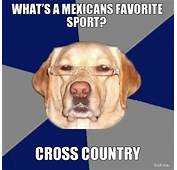 WHAT'S A MEXICANS FAVORITE SPORT CROSS COUNTRY  Racist Dog