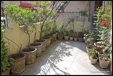 gardening thread page  india travel forum bcmtouring