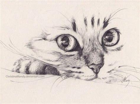 Cat Pencil feline sketch pencil and in color feline sketch