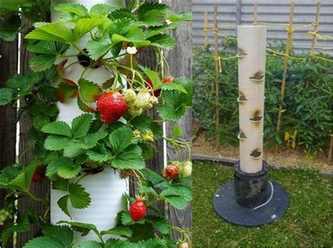 Pvc Pipe Vertical Strawberry Plant Container Garden How To Pvc Garden Ideas
