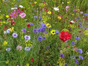 wild flower seed mixes lisa cox garden designs blog