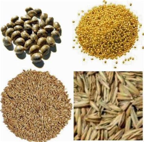 Vitamin Untuk Burung Kicau kicaupedia jenis makanan dan vitamin yang baik untuk