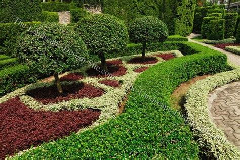 garten zierpflanze formal evergreen trees small ornamental trees in formal