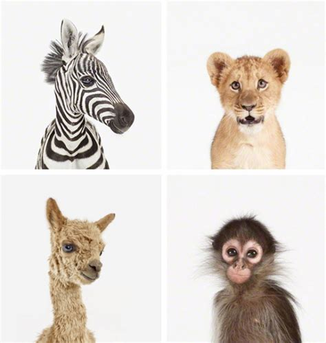 The Animal Print Shop Little Gatherer Animal Pictures For To Print