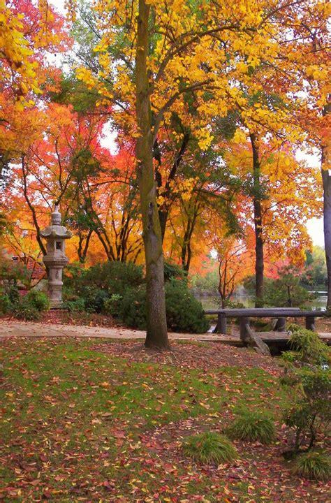 tree fresno ca park fresno ca fall trees photo by