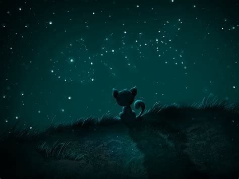 wallpaper cat night beautiful night sky wallpaperwallpaper background