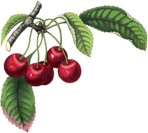 best vintage cherries image the graphics fairy