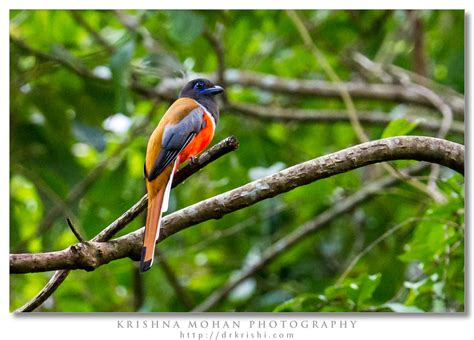 bird watching pictures posters news and videos on your