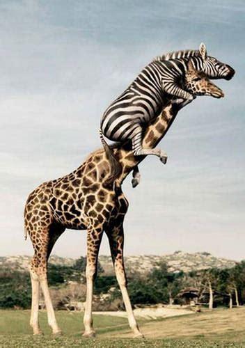 animals doing xcitefun net
