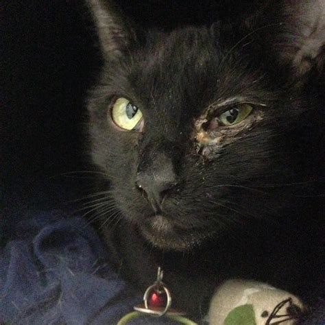 Black Cat black cat rescue a mission to save black cats
