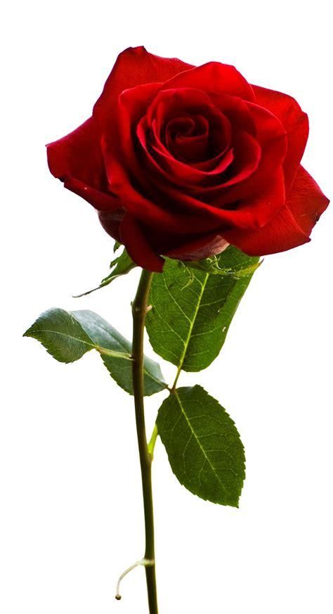 fiore in pin fiori in resina on