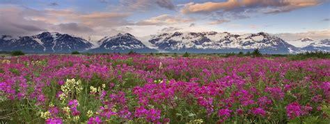 different valley pics valley of flowers trek plus valley adventure