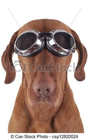 Motorradbrille Hund by Stock Foto Av Hund Tr 246 Ttsam 197 Rg 229 Ng Motorcykel Glas 246 Gon