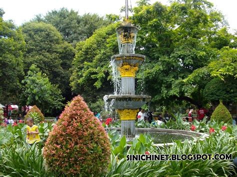 Bibit Jagung Di Surabaya taman flora kebun bibit bratang surabaya sinichinet