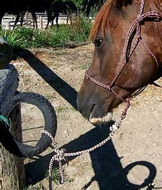 how much weight can a horse carry comfortably 1000 images about how to info on pinterest horses