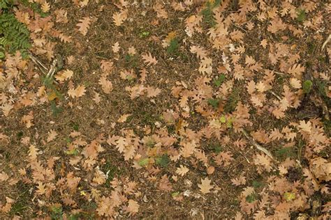 pattern nature ground leavesdead0060 free background texture leaves forest