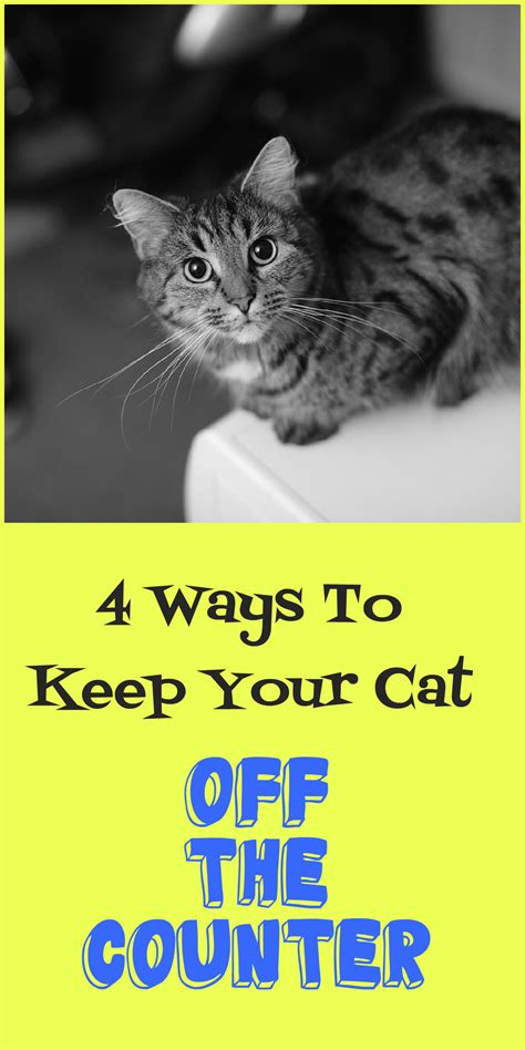 how to keep cat table how to keep cats kitchen table choice image bar