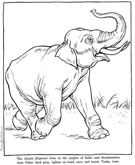 Elephant 94 Animals Printable Coloring Pages | elephant 94 animals printable coloring pages