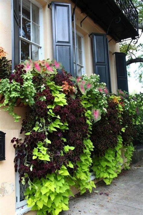 window box indoor 1000 ideas about indoor window boxes on pinterest