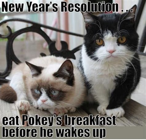 Grumpy Cat New Years Meme - grumpy cat quot tardar sauce quot and her brother together